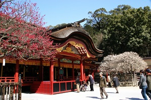 Ume blossoms in Dazaifu-tenmangu Shrine in Fukuoka Prefecture
