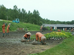 Image of farm work by prisoners