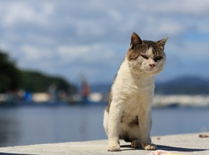 A cat in Tashirojima