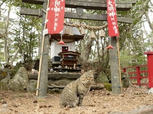 A cat at Cat Shrine in Tashirojima