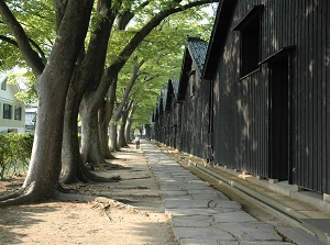 Sankyo warehouse and zelkova trees