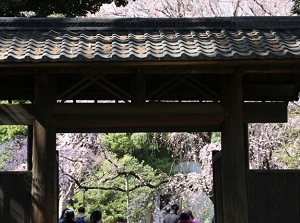 Entrance gate of Rikugien and cherry blossoms