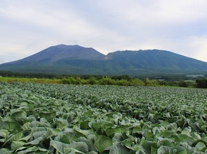 Mount Asama and the field of cabbage