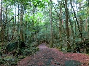 Walking trail in Aokigahara