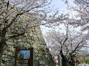 Matsusaka Castle in spring