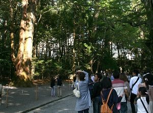 Forest around the approach to main shrine in Naiku