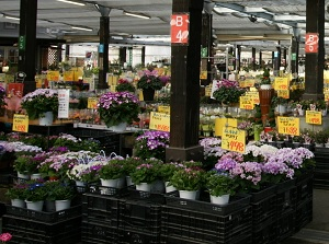 Flower market in Nabana no Sato