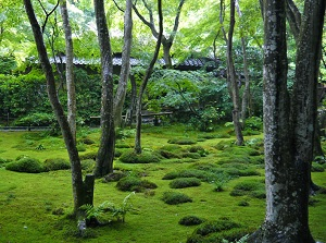 Garden covered with moss in Giouji