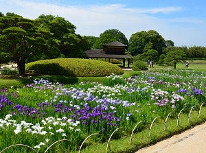 Korakuen in early summer