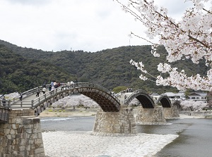 Kintai Bridge in spring