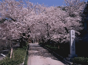 Entrabce of Kannon-in in spring