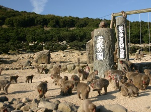 Monkey Park in Choshikei