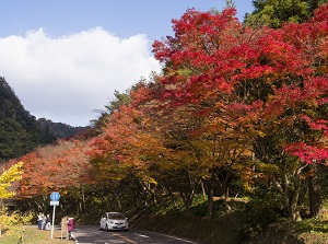 Shin-Yabakei in autumn
