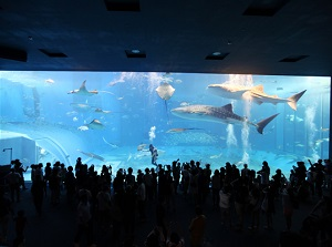 Large water tank in Okinawa Churaumi Aquarium